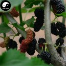 Buy Mulberry Tree Seeds 400pcs Plant Chinese Fructus Mori For Fruits Sang Shen
