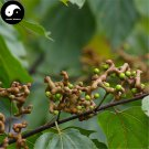 Buy Honey Raisin Tree Seeds 120pcs Plant Chinese Hovenia Acerba For Guai Zao