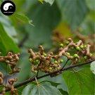Buy Honey Raisin Tree Seeds 120pcs Plant Chinese Hovenia Acerba For Guai Zao