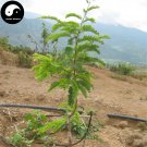 Buy Tamarindus Indica Seeds 60pcs Plant Tamarind Pulp Tree For Herb Suan Jiao