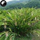Buy Amomum Villosum Seeds 120pcs Plant Chinese Herb Amomi For Sha Ren