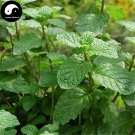 Buy Herba Menthae Seeds 200pcs Plant Peppermint For Mint Herb Bo He