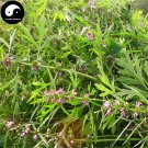 Buy Motherwort Herb Seeds 200pcs Plant Herba Leonuri For Leonurus Yi Mu Cao