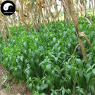 Buy Andrographis Herb Seeds 400pcs Plant Herba Andrographis For Chuan Xin Lian