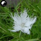 Buy Dianthus Superbus Seeds 100pcs Plant Herba Dianthi For Qu Mai Cao