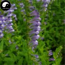 Buy Skullcap Herb Seeds 400pcs Plant Scutellariae Barbatae For Ban Zhi Lian