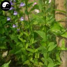 Buy Skullcap Herb Seeds 200pcs Plant Scutellariae Barbatae For Ban Zhi Lian
