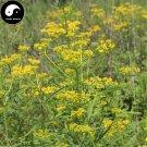 Buy Herba Patriniae Seeds 200pcs Plant Dahurian Patrinia Herb For Bai Jiang Cao