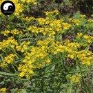 Buy Herba Patriniae Seeds 400pcs Plant Dahurian Patrinia Herb For Bai Jiang Cao