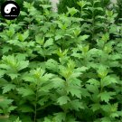 Buy Artemisiae Argyi Seeds 100pcs Plant Argy Wormwood Herb For Mugwort Ai Cao Ye
