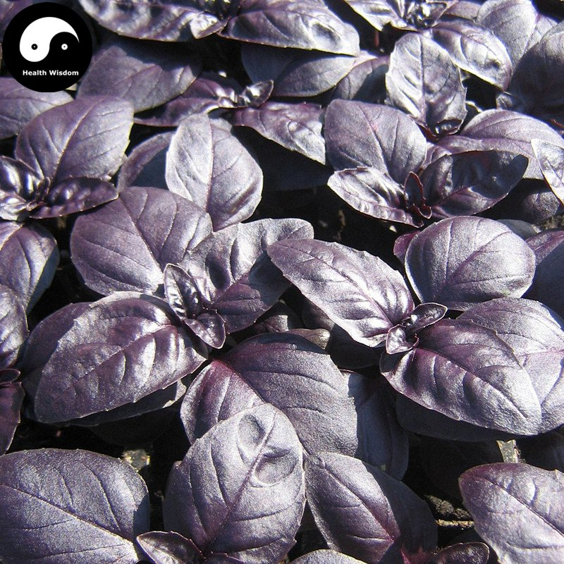 Buy Purple Basil Herb Seeds 400pcs Plant Ocimum Basilicum For Ruffles Luo Le