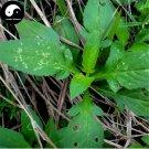 Buy Herba Patriniae Seeds 100pcs Plant Dahurian Patrinia Herb For Su Bai Jiang