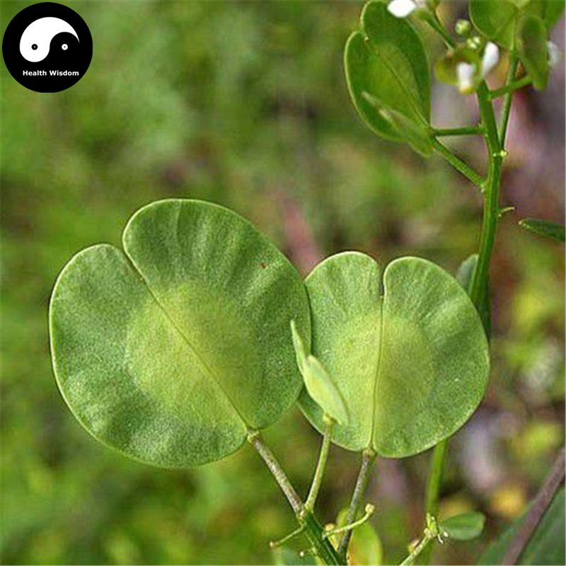 Buy Herba Thlaspis Seeds 400pcs Plant Boor's Mustard Herb For Xi Ming