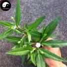 Buy Herba Ecliptae Seeds 200pcs Plant Yerbadetajo Herb For Mo Han Lian Cao