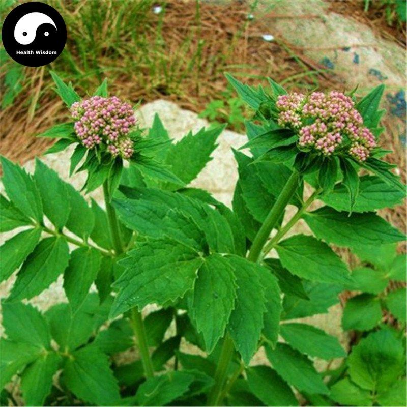 Buy Herba Valerianae Seeds 400pcs Plant Chinese Valerian Herb For Xie Cao