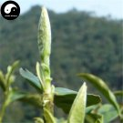 Buy White Tea Tree Seeds 60pcs Plant Fuding White Tea For Fu Ding Bai Cha