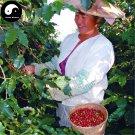 Buy Coffee Tree Seeds 200pcs Plant Chinese Yunnan Arabica Coffee Garden