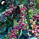 Buy Coffee Tree Seeds 100pcs Plant Chinese Yunnan Arabica Coffee Garden