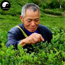Buy Wuyi Black Tea Tree Seeds 120pcs Plant Wu Yi Black Tea For Jin Jun Mei