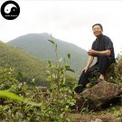 Buy Wuyi Black Tea Tree Seeds 60pcs Plant Wu Yi Black Tea For Lapsang Souchong