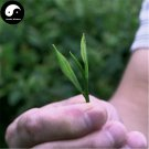 Buy Wuyi Black Tea Tree Seeds 30pcs Plant Wu Yi Black Tea For Lapsang Souchong