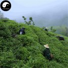 Buy Black Tea Tree Seeds 120pcs Plant Chinese Keemun Tea For Qi Men Hong Cha
