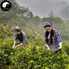 Buy Black Tea Tree Seeds 60pcs Plant Chinese Keemun Tea For Qi Men Hong Cha