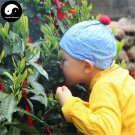 Buy Green Tea Tree Seeds 30pcs Plant Chinese Monkey Tea For Tai Ping Hou Kui