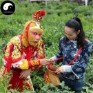 Buy Green Tea Tree Seeds 60pcs Plant Chinese Monkey Tea For Tai Ping Hou Kui