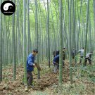 Buy Bamboo Tree Seeds 120pcs Plant Phyllostachys Heterocycla For Bamboo Shoots