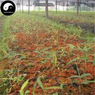 Buy Bamboo Tree Seeds 60pcs Plant Phyllostachys Heterocycla For Bamboo Shoots