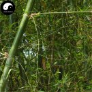 Buy Thorn Bamboo Tree Seeds 100pcs Plant Chimonobambusa Phyllostachys For Bamboo