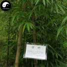 Buy Square Bamboo Tree Seeds 200pcs Plant Bamboo For Bamboo Shoots