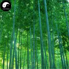 Buy Green Bamboo Tree Seeds 100pcs Plant Bamboo For Bamboo Shoots