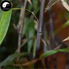 Buy Purple Bamboo Tree Seeds 50pcs Plant Bamboo For Bamboo Shoots