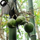 Buy Pear Bamboo Tree Seeds 60pcs Plant Melocanna Baccifera For Bamboo Garden