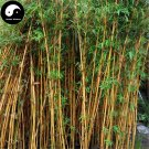 Buy Silk Bamboo Tree Seeds 120pcs Plant Bambusa Multiplex For Qin Si Bamboo