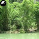 Buy Fernleaf Bamboo Tree Seeds 30pcs Plant Chinese Bamboo For Bamboo Garden