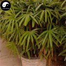 Buy Guanyin Bamboo Tree Seeds 30pcs Plant Chinese Bamboo For Bamboo Garden