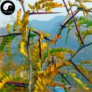 Buy Thistles And Thorns Tree Seeds 200pcs Plant Vine Tree Fence Thorns Jing Ji