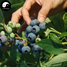 Buy Blueberry Fruit Tree Seeds 200pcs Plant Anthocyanin Berries For Bilberry