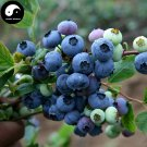 Buy Blueberry Fruit Tree Seeds 100pcs Plant Anthocyanin Berries For Bilberry