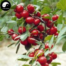 Buy Dwarf Cherry Fruit Tree Seeds 120pcs Plant Cerasus Humilis For Calcium Fruit