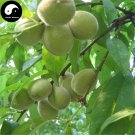 Buy Peach Fruit Tree Seeds 40pcs Plant Peaches For Chinese Fruit Tao