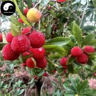 Buy Strawberry Fruit Tree Seeds 200pcs Plant Berry Myrica For Chinese Yang Mei