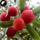 Buy Strawberry Fruit Tree Seeds 100pcs Plant Berry Myrica For Chinese Yang Mei