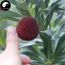 Buy Strawberry Fruit Tree Seeds 50pcs Plant Berry Myrica For Chinese Yang Mei