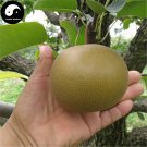 Buy Yamanashi Fruit Tree Seeds 50pcs Plant Sorb Pear For Chinese Pyrus Shan Li