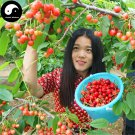 Buy Cherry Fruit Tree Seeds 120pcs Plant Cerasus Pseudocerasus For Cherries