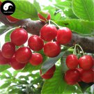 Buy Cherry Fruit Tree Seeds 30pcs Plant Cerasus Pseudocerasus For Cherries